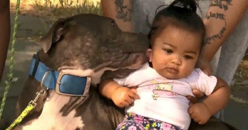 """La siguiente historia que vas a leer a continuación es sin duda alguna un verdadero milagro de la vida, se trata de una perrita de la raza Pitbull llamada """"Sasha"""" que salvó de morir quemada a una pequeña bebé de siete meses en medio de un incendio"""