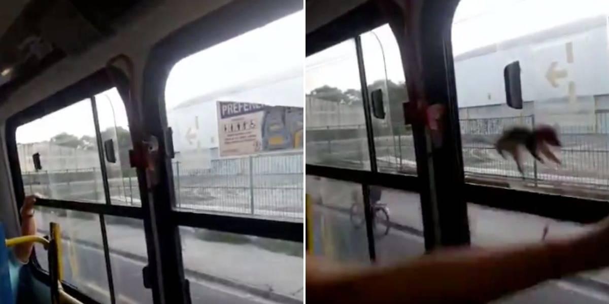 El video grabado por el pasajero luego de ser compartido en sus redes sociales se hizo viral muy rápidamente y actualmente circula por Facebook, Instagram, WhatsApp y Twitter. Rata