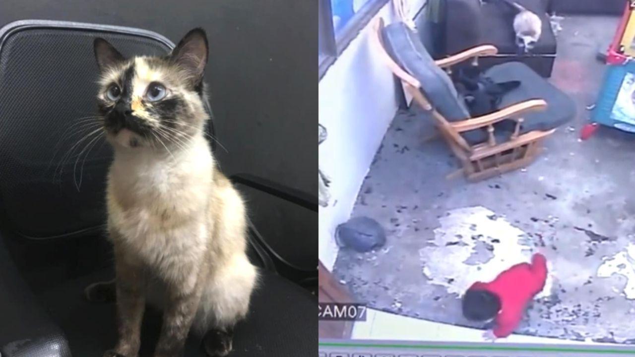 En un video que desde hace algunos meses circula por las redes sociales, se puede ver el increíble instante cuando una gata le salva la vida a un bebé, el niño en ese preciso momento se encontraba solo y jugando en su casa, el animalito lo observa y analiza todos sus movimientos en todo momento